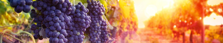 California Winery Solar Power